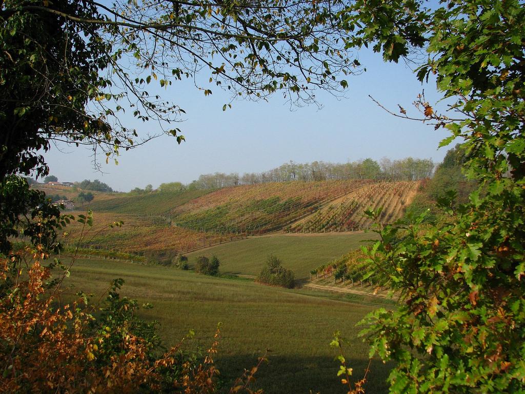 Strada del vino e della nebbia
