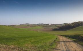sterrato nel Monferrato